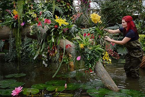 Опали цветы и желтеет ствол у фаленопсиса