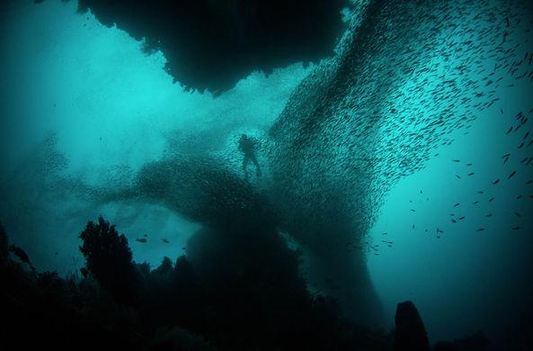 Российский дайвер раскрыл секрет «жутких звуков» со дна Красного моря