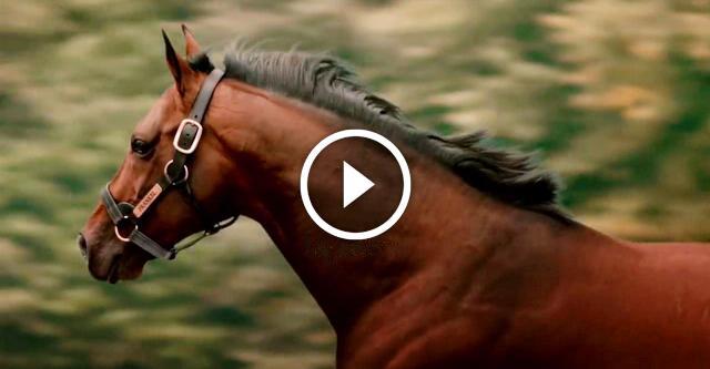Фрэнкел — самый дорогой конь в истории