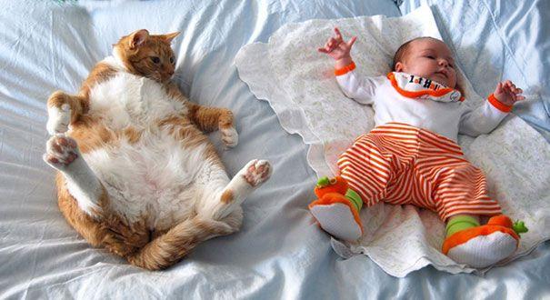 Вот почему каждому ребенку нужна кошка!