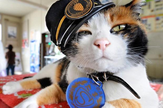 Кошка-смотритель животные, книга рекордов гиннеса, коты, мир
