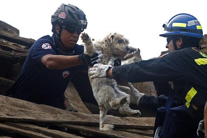 Трогательные истории спасения животных