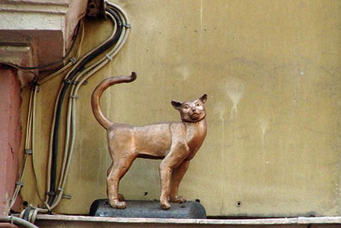 Почему ценнее кошки для петербуржцев зверя нет