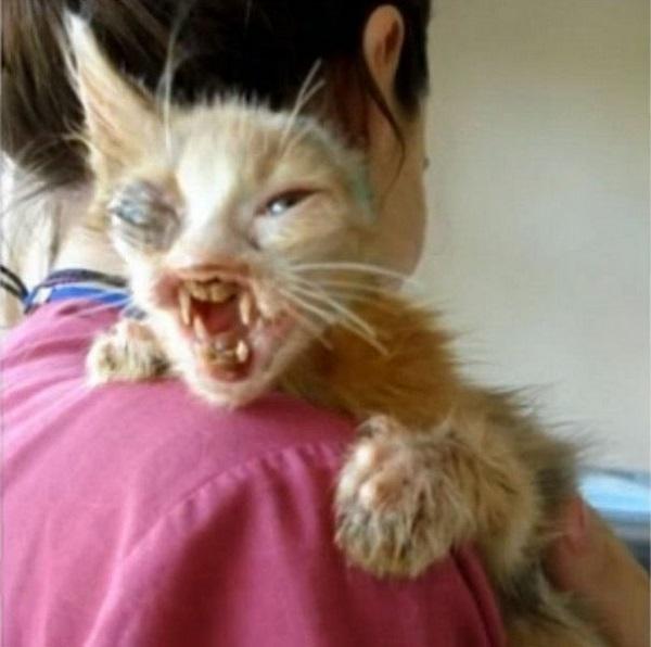 На этого изуродованного котенка нельзя было смотреть без слёз.