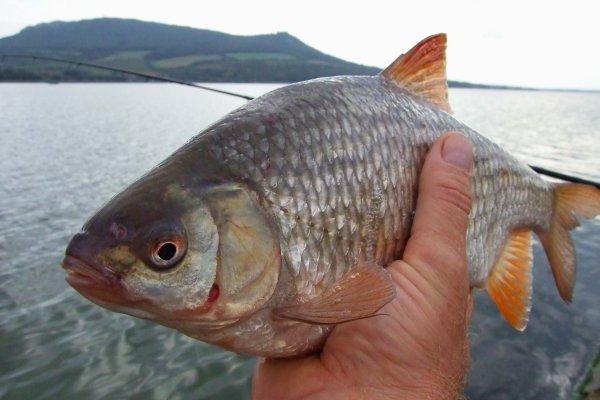 Как правильно приваживать рыбу