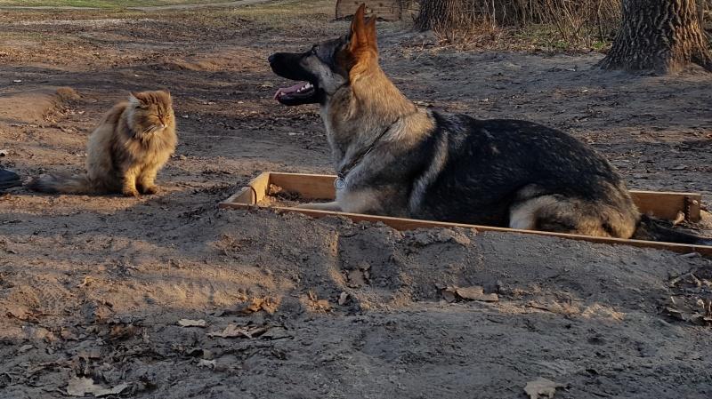 «Он же провокатор». Кот, выросший среди псов, участвует в дрессировке собак