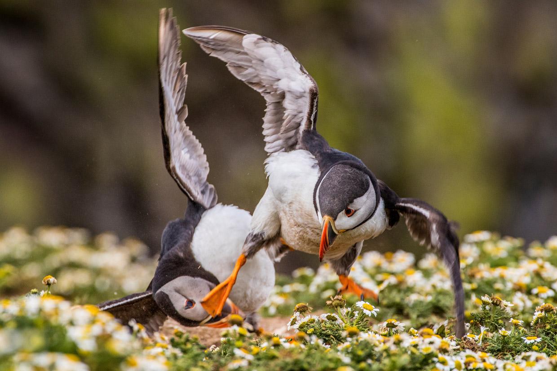 Победители конкурса фотографий дикой природы 2016