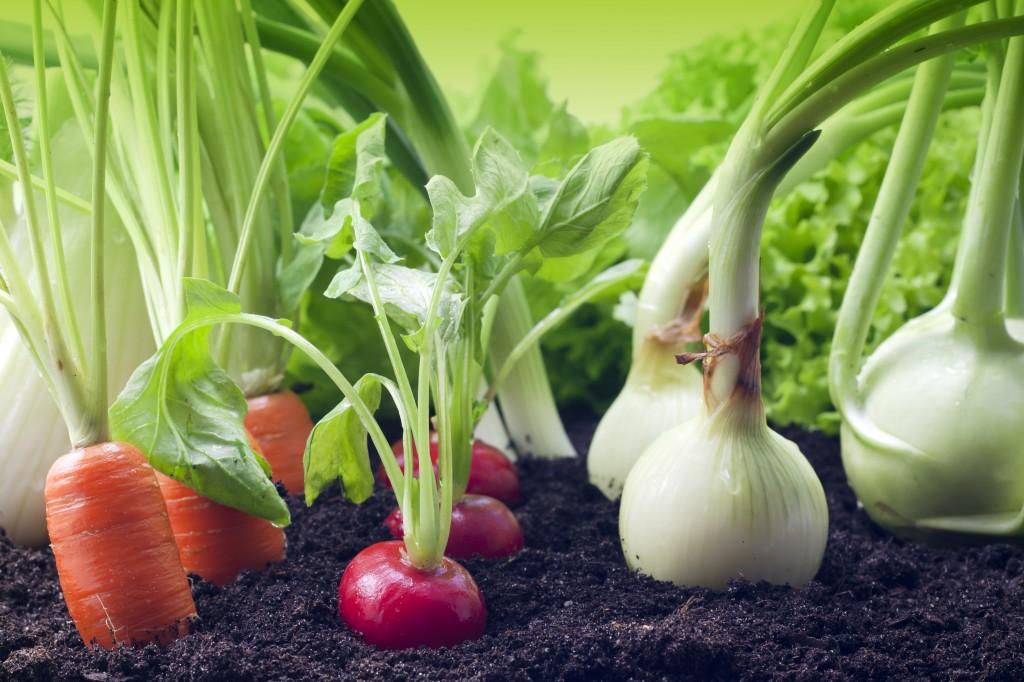 Как увеличить урожай без затрат? Размещаем овощи по науке!