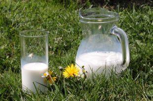 Каким бывает молоко?