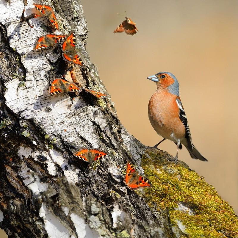 Весеннее пение птиц...