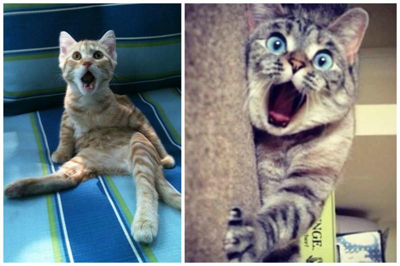 Очень сильно удивляться коты, милота, поведение, счастье, эмоции