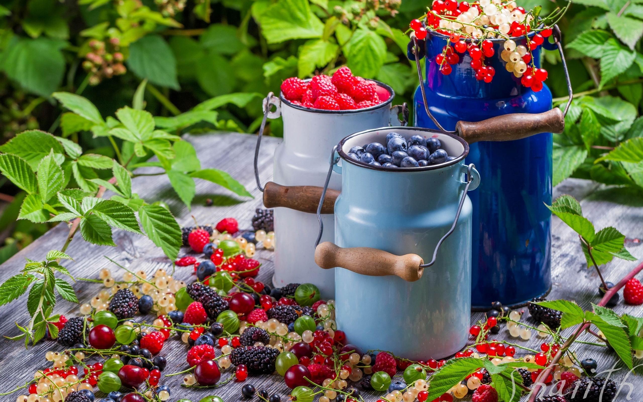Как угодить ягодникам. Минимум ухода, максимум урожая