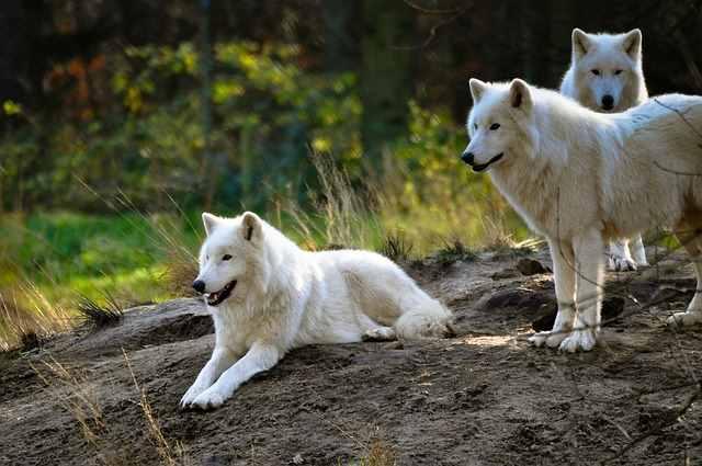 Загадочные Белые существа из…
