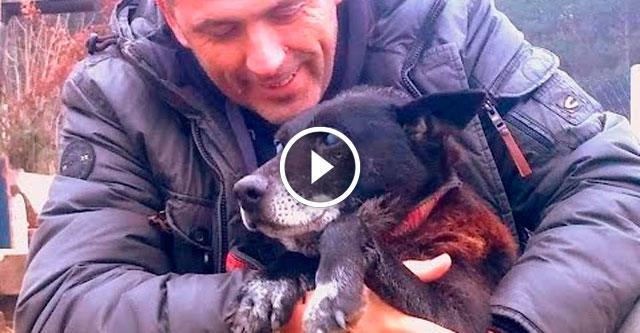 Спасение слепого пса