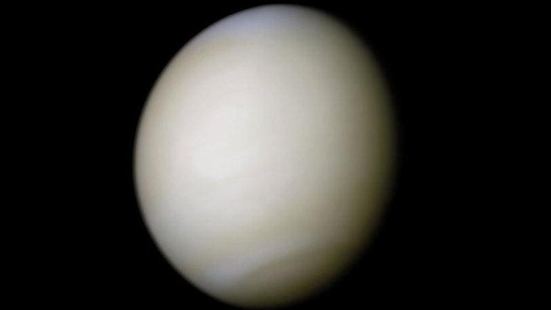 Ученые открыли на Земле существо родом с Венеры