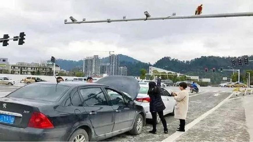 Китаянка устроила ДТП, перепутав зад обезьяны со светофором