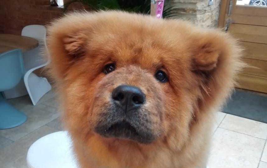 В Британии арестованного за поведение щенка вернули хозяевам