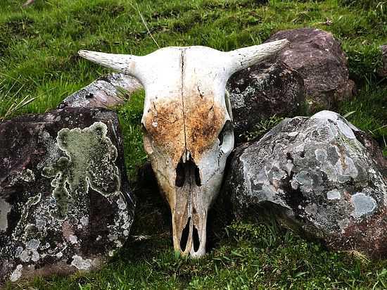Раскрыта тайна находки сундука «Аненербе» с черепами: «Инопланетяне полные козлы»