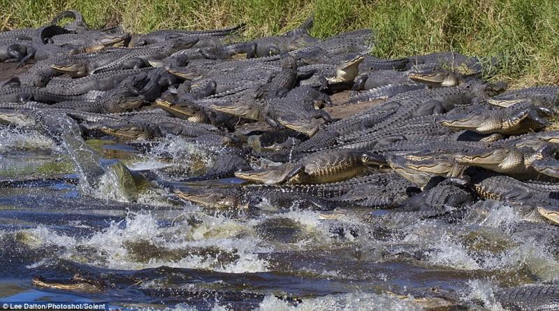 Аллигаторы Флориды встречают весну!