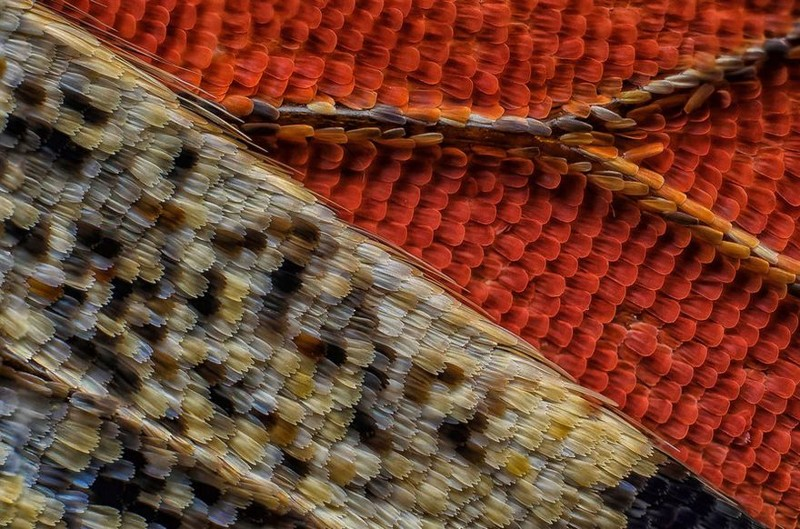 5. Одиннадцатое место: чешуйки крыла бабочки nikon, конкурс, красота, фото