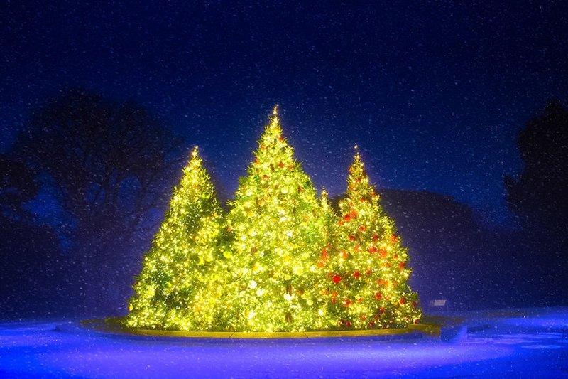 В Нью-Йоркском ботаническом саду - просто рождественская сказка Нью -Йорк, красиво, красивый вид, новогоднее настроение, новый год, рождество, сша, фото