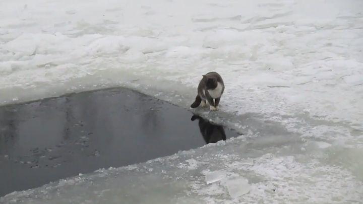 Котик поймал рыбу на зимней рыбалке в ледяной проруби