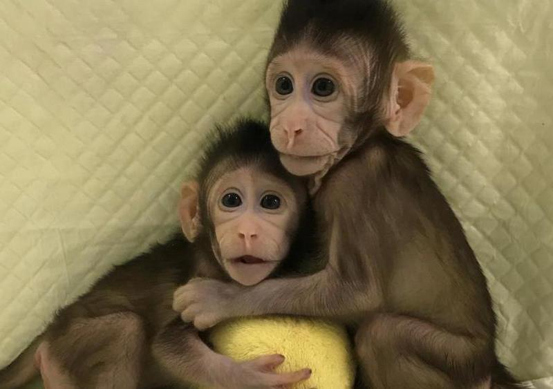 Ученые научились клонировать людей