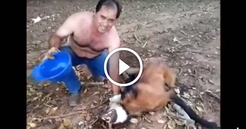 Дальнобойщик на дороге встретил обезвоженное тело волка и набрался смелости привести его в чувство…