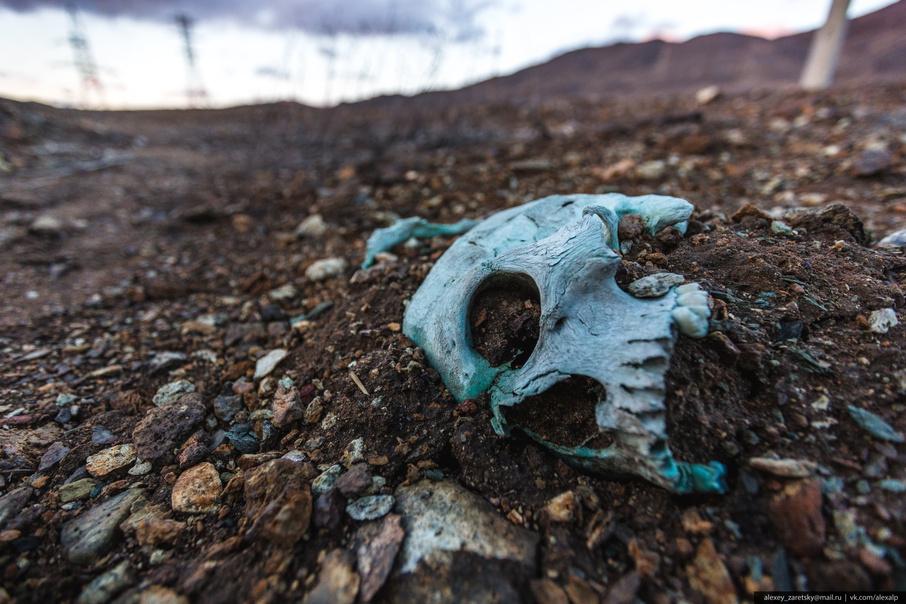 Размыло черепа и кости: мэрию на Южном Урале обязали перезахоронить дореволюционное кладбище