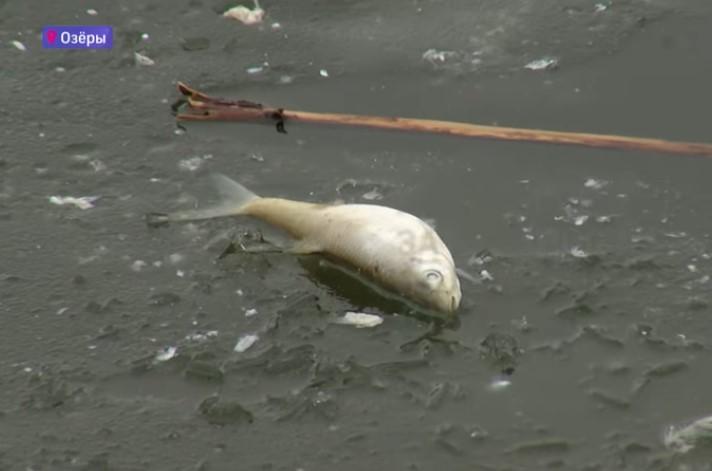 Задохнувшуюся рыбу находят по всему Подмосковью