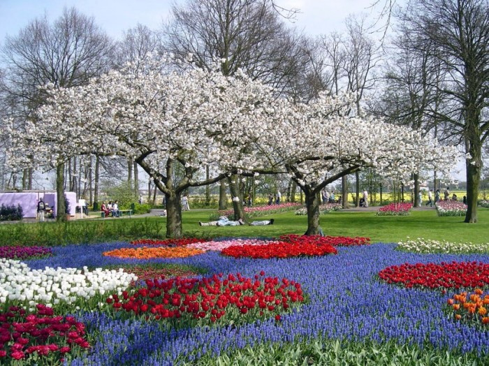 Царство тюльпанов. Море цветов в голландском парке Keukenhof