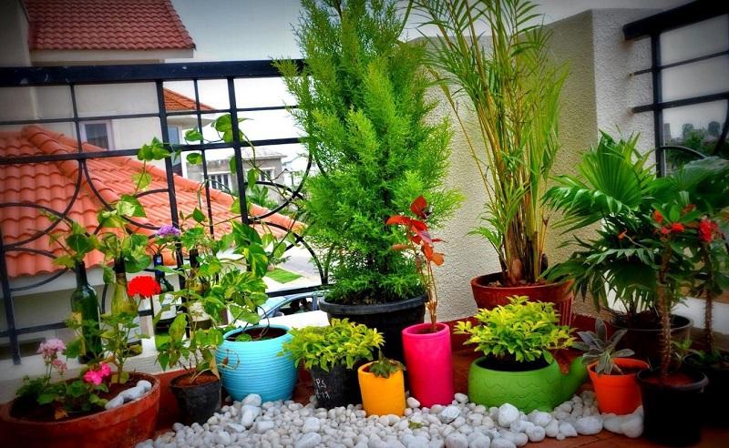 Самые благоприятные комнатные растения: приносят удачу и благополучие в семью