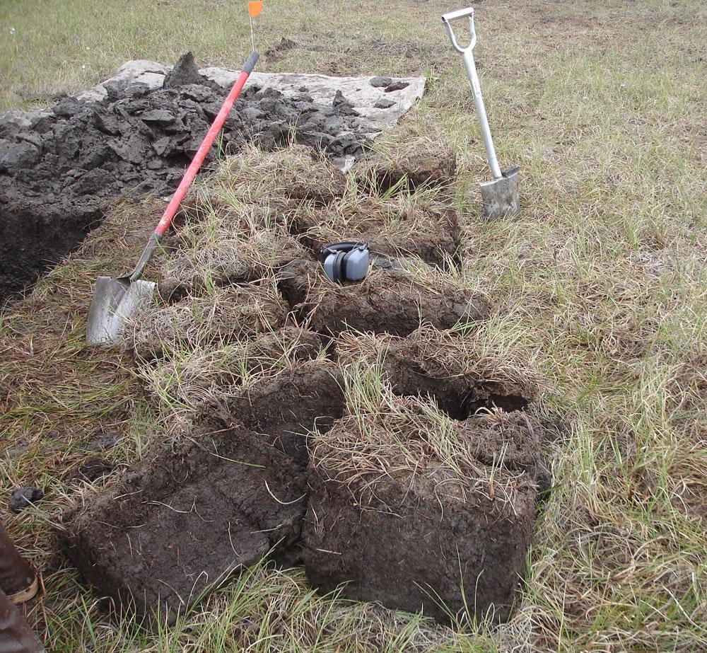 Древнее Подмосковье вымерло из-за метеорита