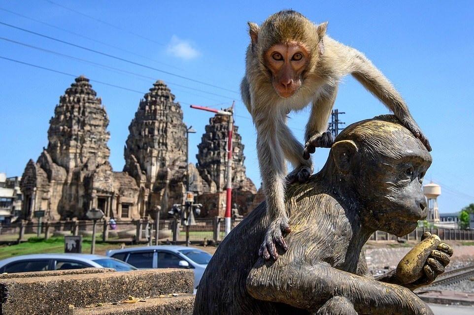 Как злые обезьяны заполонили целый город вТаиланде