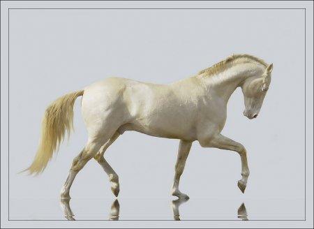 Фото лошади изабелловой масти