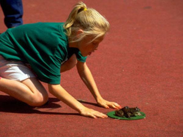 Самые необычные соревнования животных
