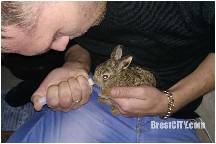 В Бресте водитель автобуса спас маленького зайца, который оказался на дороге