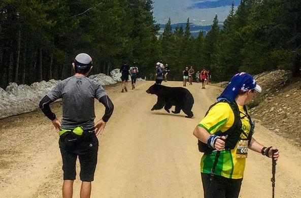 Медведь присоединился к марафону и «ускорил» его участников