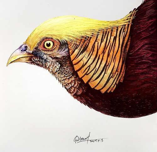 Golden Pheasant. Realistic ink pen Illustration by Chinese artist RLoN Wang