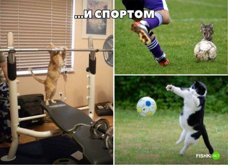 20 фотографий, доказывающих, что кошки медленно превращаются в людей кот, юмор