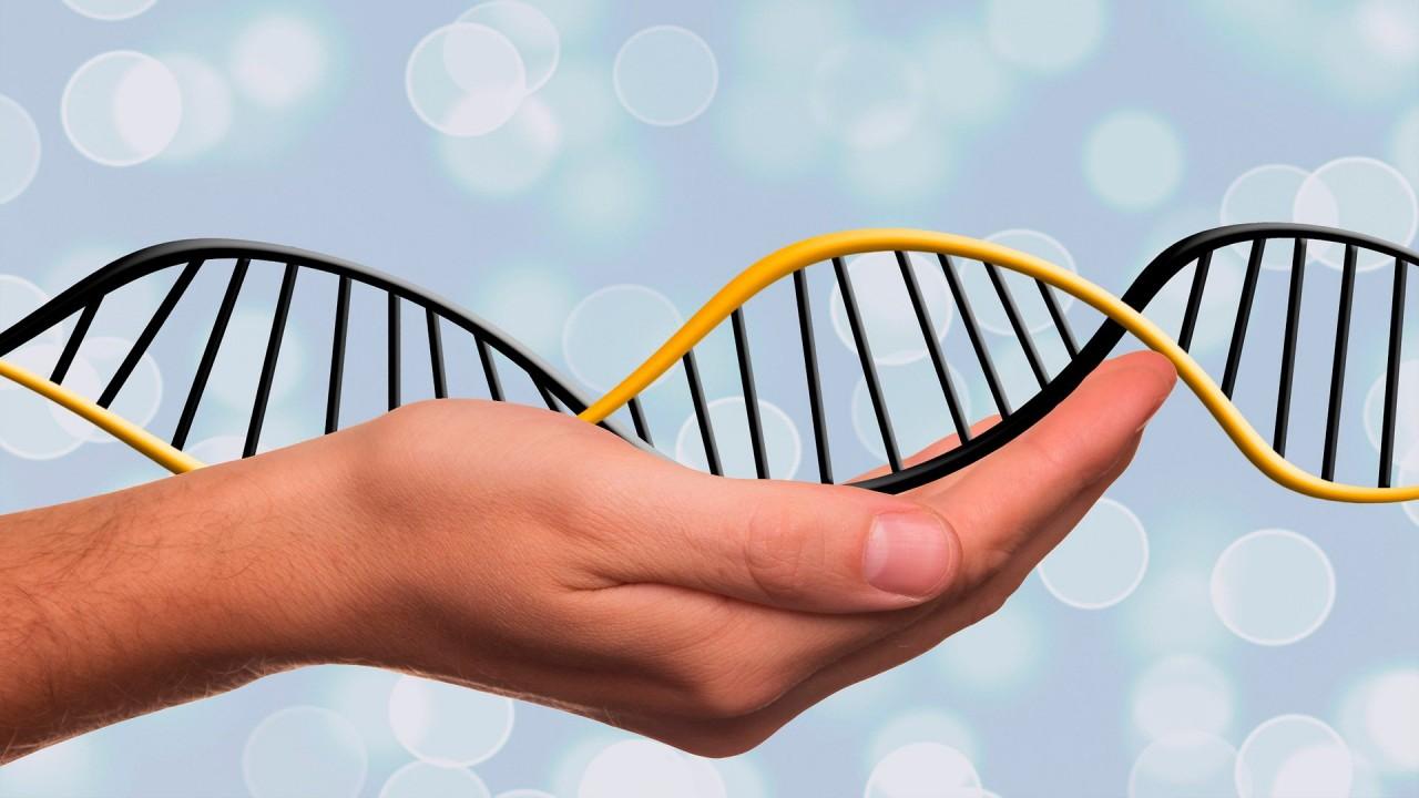 Биологи узнали, что фрагменты ДНК из продуктов с ГМО могут управлять генами человека