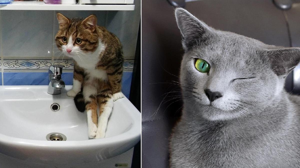 22 необычных кота, которые в прошлой жизни точно были людьми