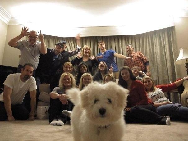 25 фото, которые стали смешнее из-за собак. Вы будете хохотать!