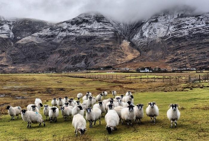 Великолепная Шотландии. / Фото: abunawaf.com