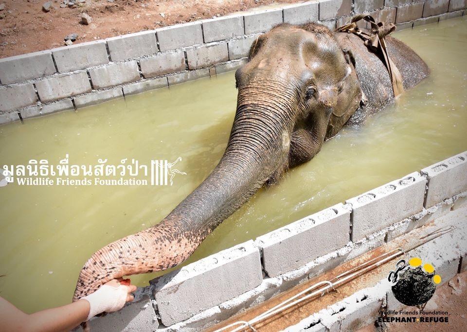Слон, спасенный из рабства, лечится водой