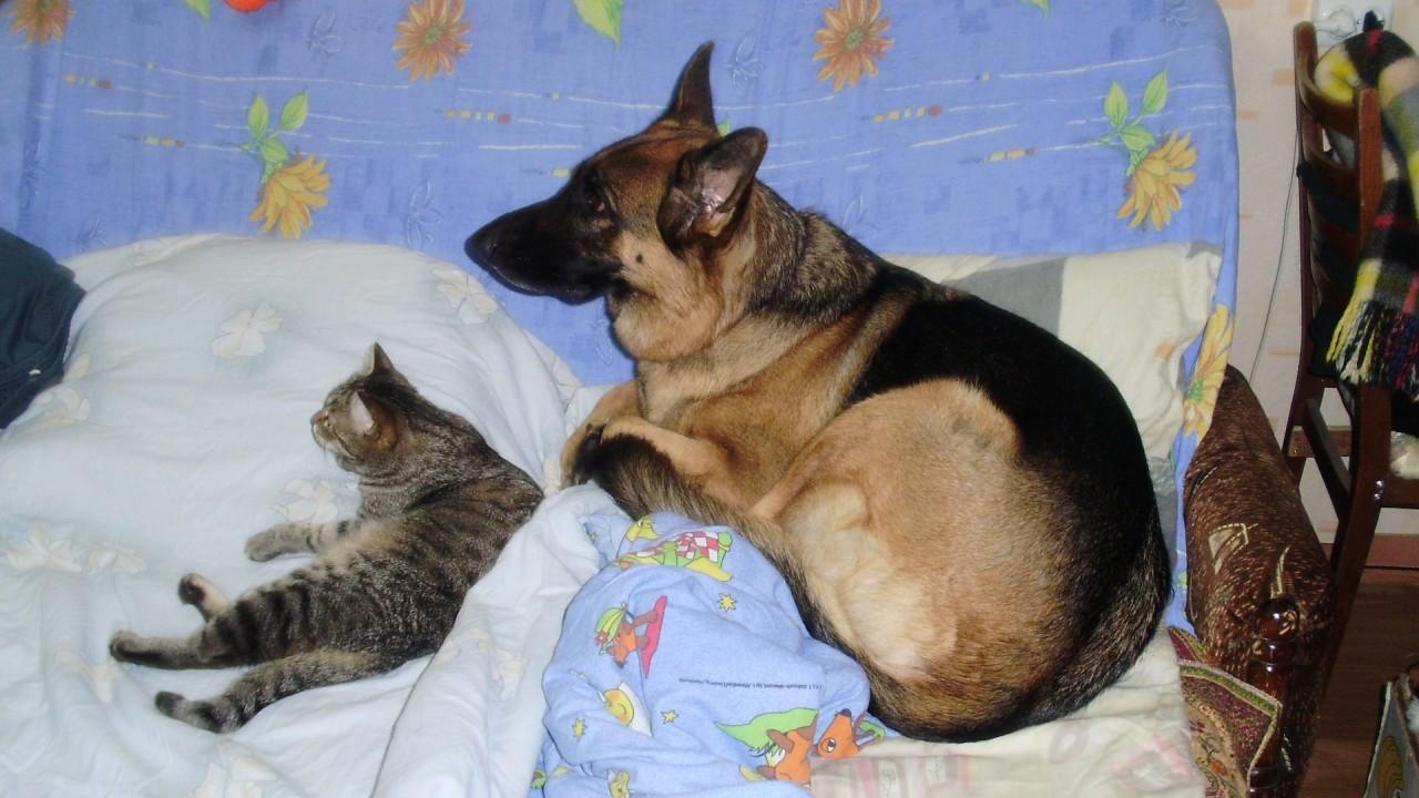 История про собаку или аллер…