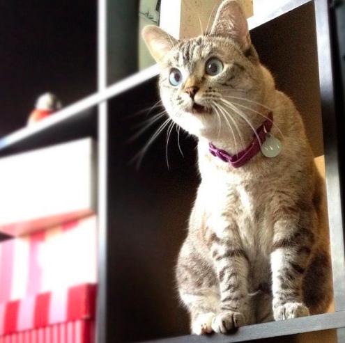 6 вредных советов, которые испортят вашего кота.