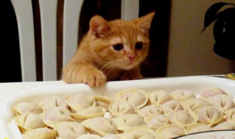 Кое-что о пользе кошек