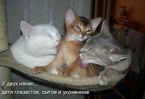 Детская котоматрица (17 шт)