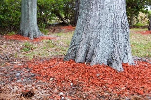 Утепляем плодовые деревья на зиму: основные советы